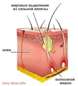 дёготь берёзовый применение внутрь от паразитов